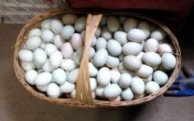 夷陵农家清水散养鲜鸭蛋