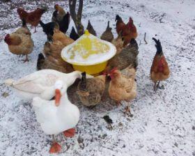 土鸡、土鸡蛋出售