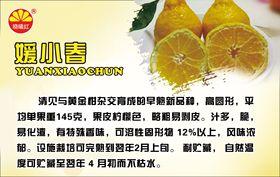 柑橘、苗木