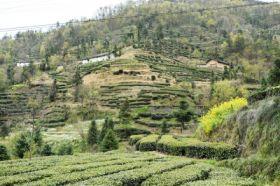 邓村乡小河制茶厂