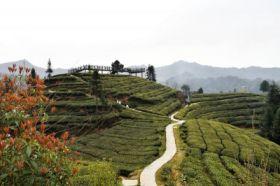 三峡茶旅小镇