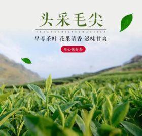 2021年新茶双狮岭头采毛尖全国包邮 产地直发 100g/150g