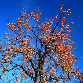 秋天,是最诗情画意的时节
