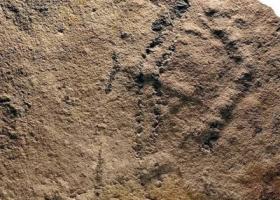 """中美科学家发现最早的爬虫化石""""夷陵虫"""""""