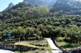 桂莲农产品合作社