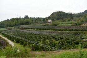兴园柑桔产销专业合作社