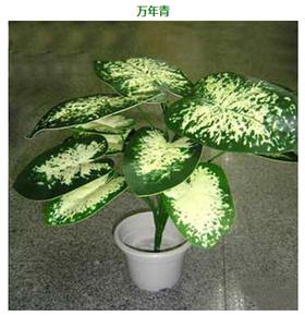 基地花卉苗木大量销售
