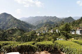 红桂香村容村貌