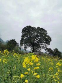 清新的乡村风景