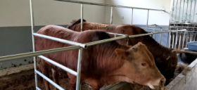 高鼎生态养牛