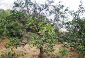 一棵果树,N次乡村自然人文体验之旅