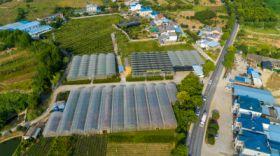 宜昌市晓曦红农业科技开发有限公司基地美景